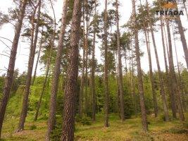 Prodej lesních pozemků v Radostíně u Sychrova